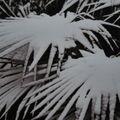 le palmier en hiver