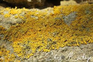 lichen_7