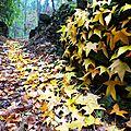 sentier de feuilles de liquidambar à l'autome yurtao