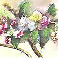 fleurs pommiers 3