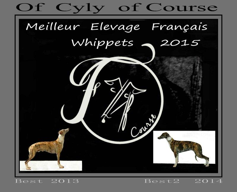 best whippet 2015