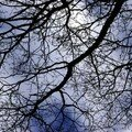 arbre2