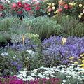 Pienza : le marché aux fleurs