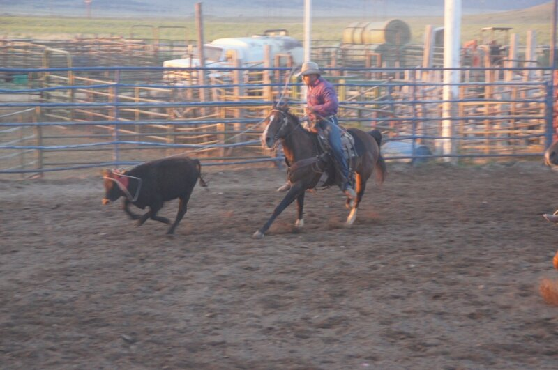 Rodeo (42)