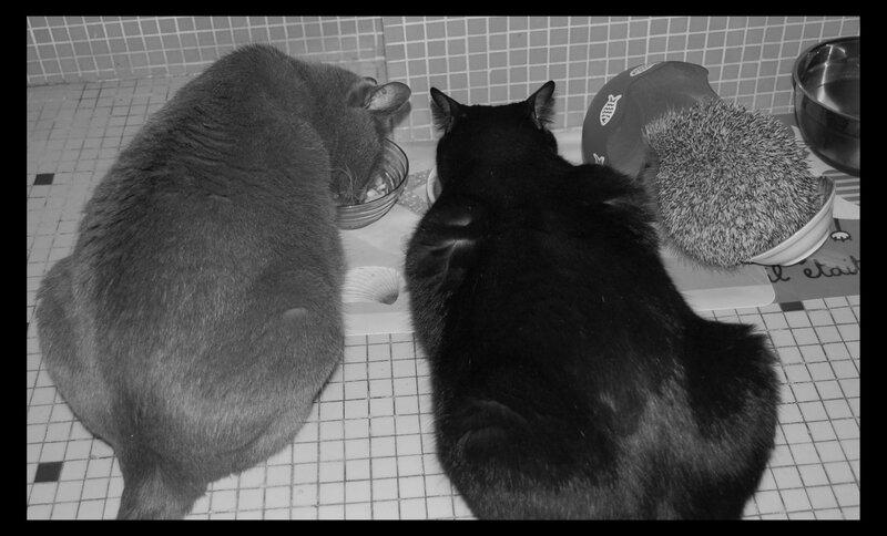 kiko et chats