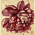 Jan van huysum (dutch, 1682-1749), flower study; a pink-red peony-like bloom, 1697-1749