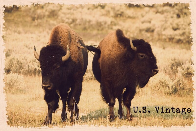 us vintage buffalo yellowstone