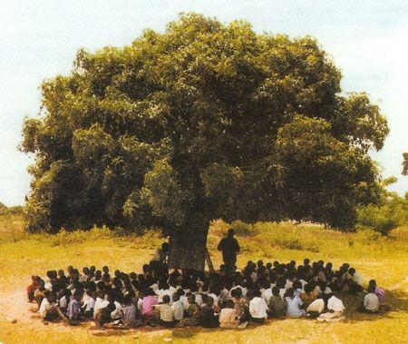 arbre_a_palabres