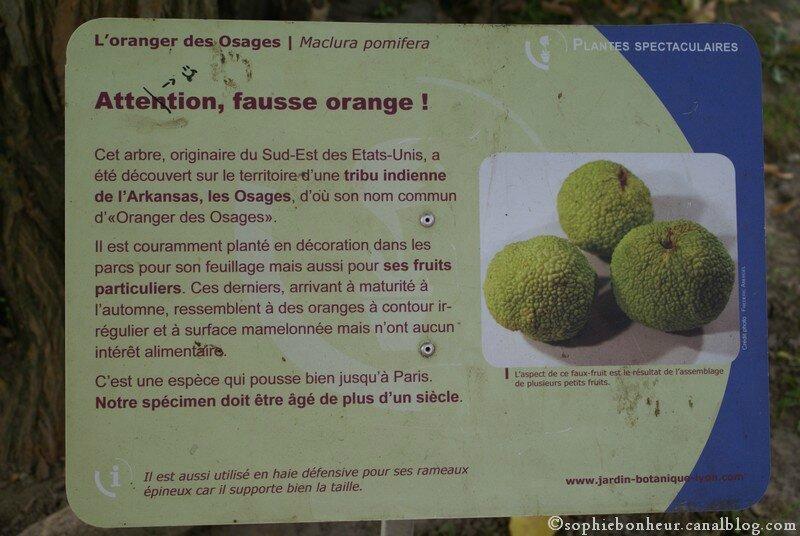 Tdor pancarte orange