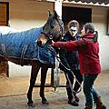 L'équitation toujours avec trott'autrement