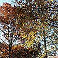 Feuillages automne 0712152