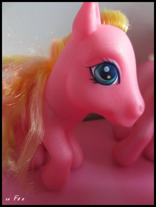 collection petit poney (7)