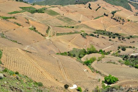 vignobles_de_Collioure_2