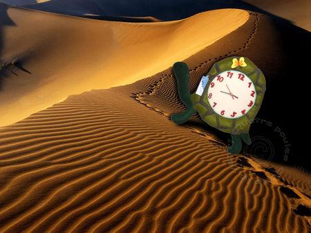 Horloge_tortue3