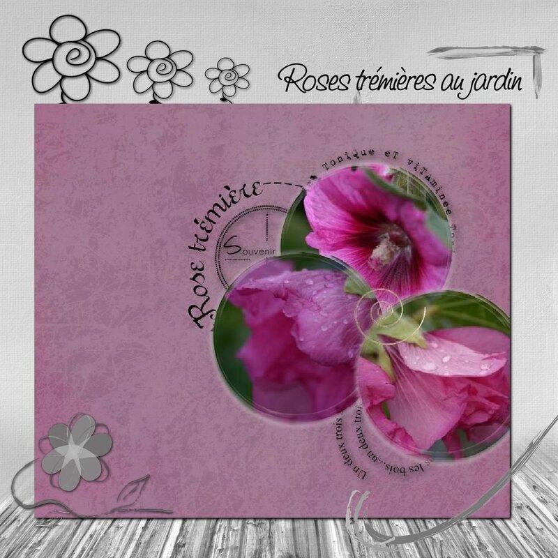 Juin fleur roses trémières