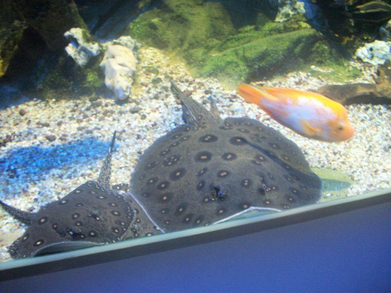 aquarium de limoges 87 les pots a pat