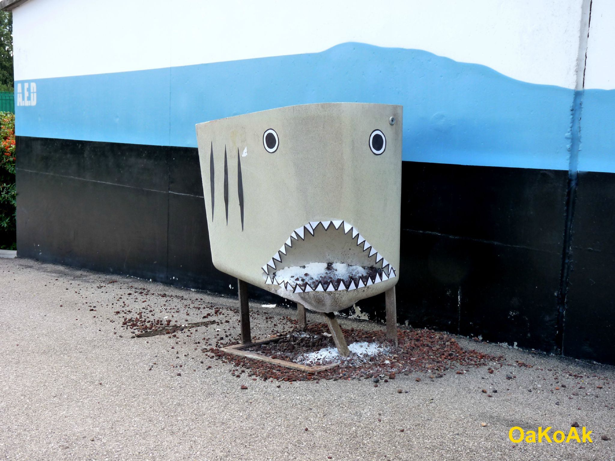 REQUIN - Copie