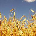 Maïsbourg, maïswiller, maïs-sous-forêt, maïsbach, maïsbronn-les-maïs, maïsheim : drôle d'alsace :