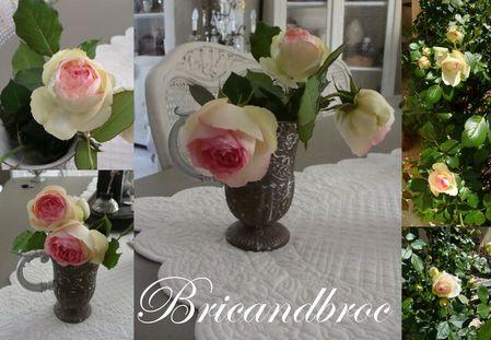 roses_jardin