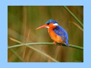 bel oiseau 1
