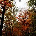 IMG_6957R3 Bois de la Houssière