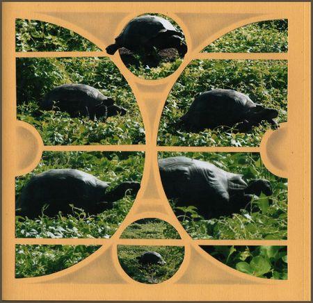 iguanas costas moldura