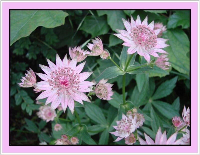 fleur 91