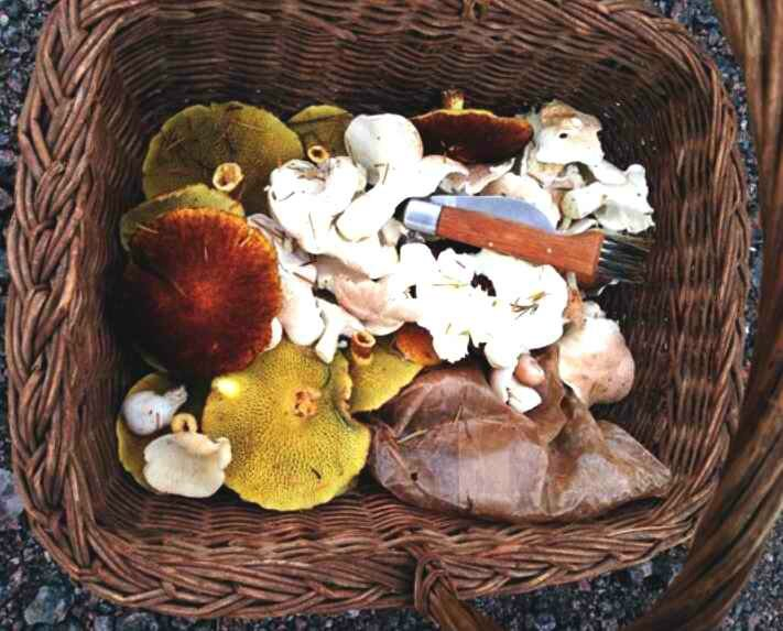 Panier de champignon