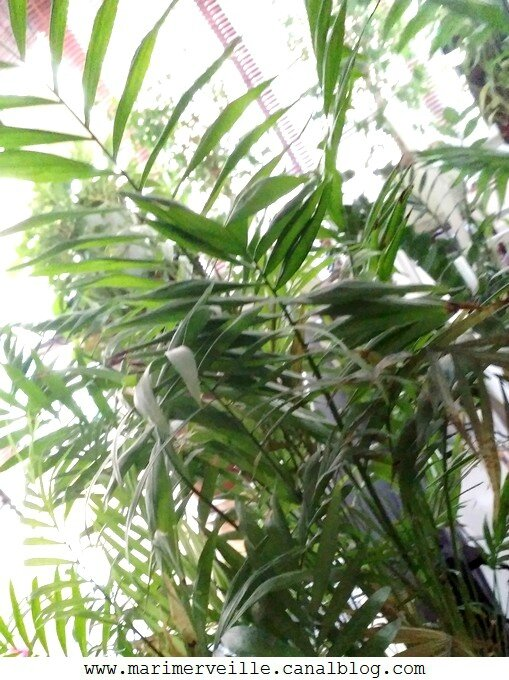 plante verte - marimerveille