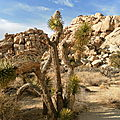 Joshua Tree National Park, CA, USA