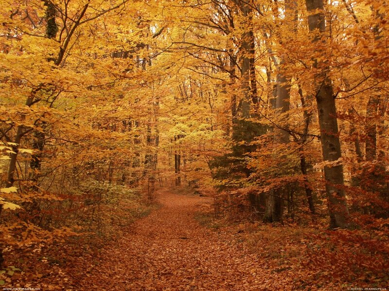 automne13