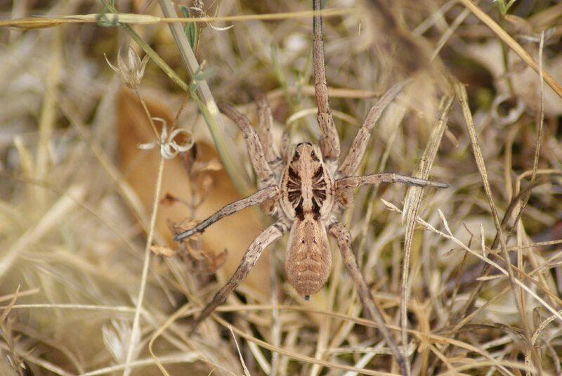 araignée 20