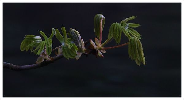 ville lulu feuilles marrronnier 3003313 3