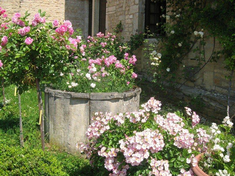 Le vieux puits du XVIème, entouré de roses anciennes .