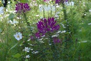 tapis_de_fleurs_2_wesserling