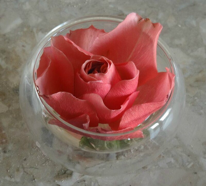 rose malta en petit verre