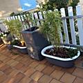 Des jardinères avec des petites baignoires en fonte