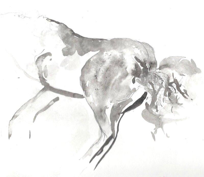 croupe de cheval