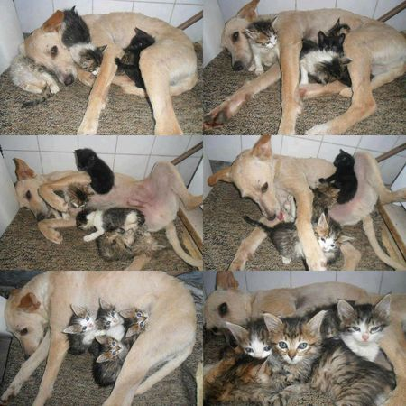 chienne_chatons