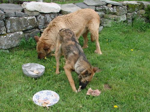 2008 05 12 Kapy et Cacahuète qui mangent des os