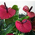 Des plantes, des plantes et des fleurs....