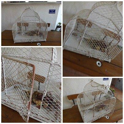 Ronde oiseaux (9)