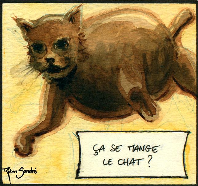 Il-gatto