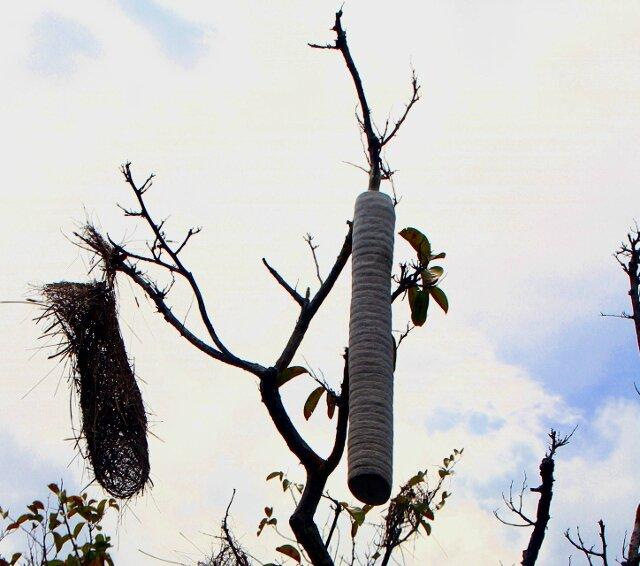 FLONA nid de guèpes et oiseaux