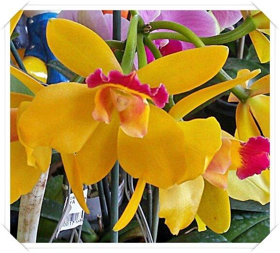 Souvent Fleurs de la Réunion (4/5) - Chanteurs des îles - Histoire et  KW47