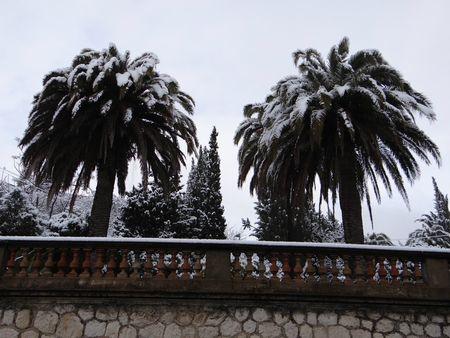Palmiers sous la neige 1