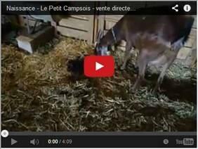 Vente directe de fromages de chèvre dans le var - naissance à la ferme
