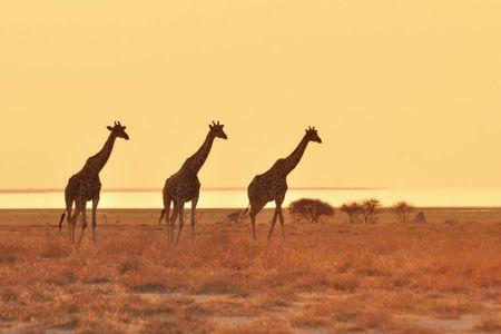 Namibie (231)