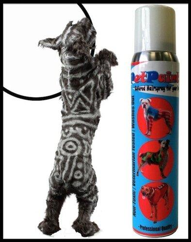 pet paint 5
