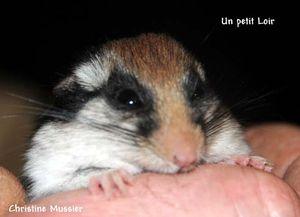 un_Loir